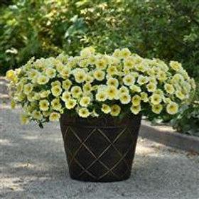 "Petunia Bees Knees - 3.5"" pot"