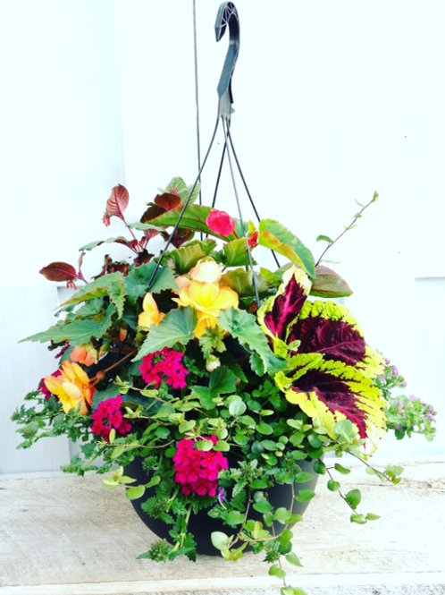 Specialty Shade Mix Hanging Basket