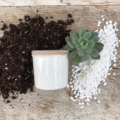Succulent Planter Kit - Plant at home