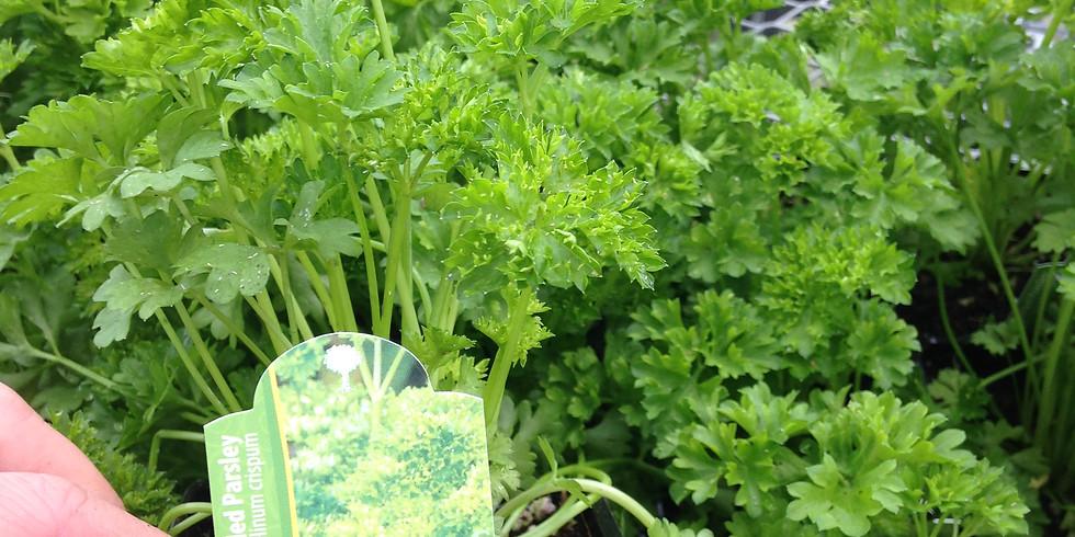 Drop in Sundays! Herb Planter!