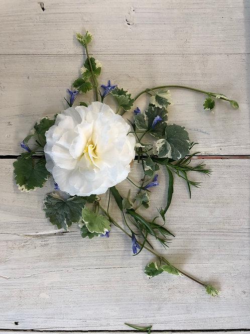 """Begonia NonStop White 3.5"""" pot"""