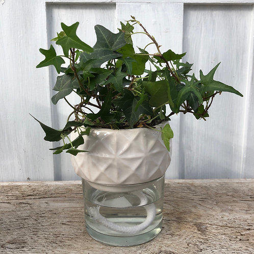 "4"" Self Watering Planter White"