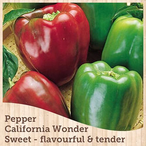 "Pepper California Wonder 3.5"" pot"