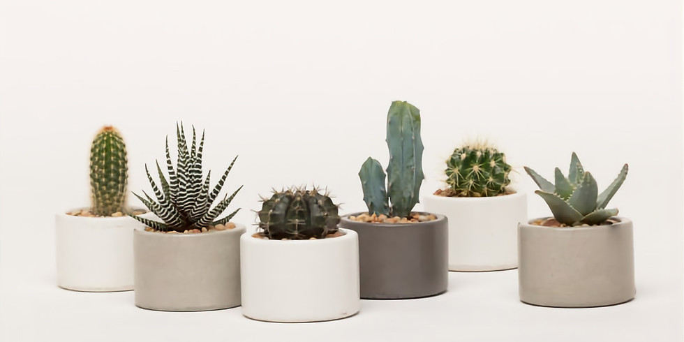 Drop in Sundays! Cactus Planter