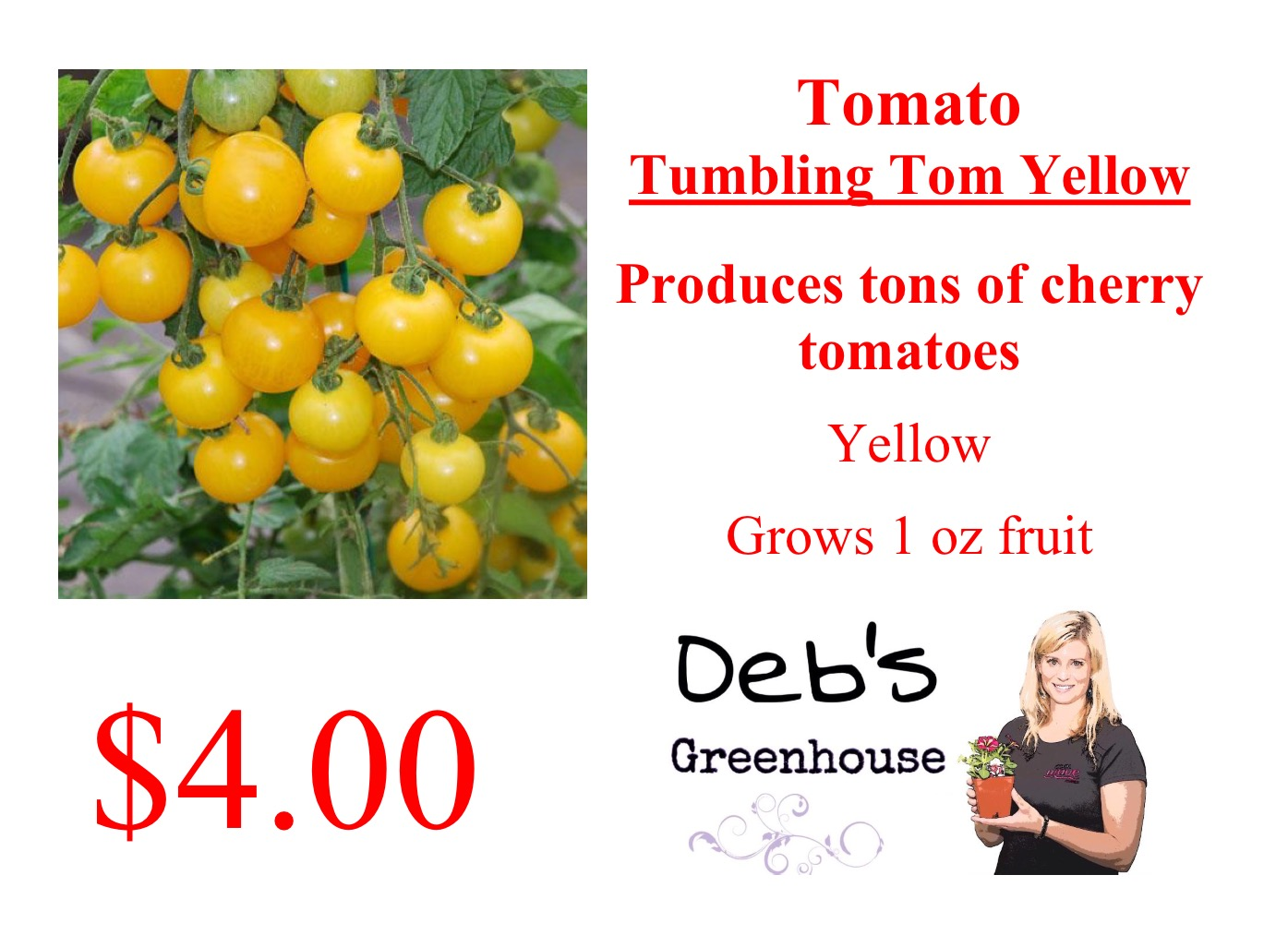 tumbling tom yellow