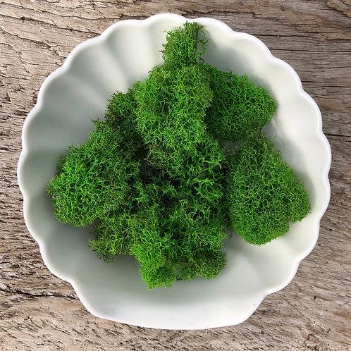 Green Reindeer Moss