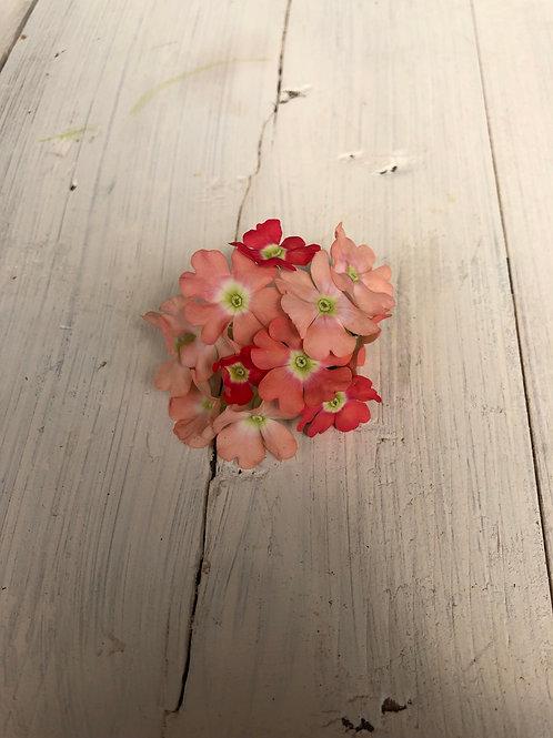 "Verbena Empress Peach 3.5"" pot"
