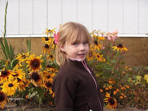 """Rudbeckia Autumn colours 6"""" pot"""