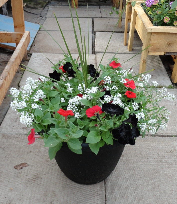 black red white planter_edited