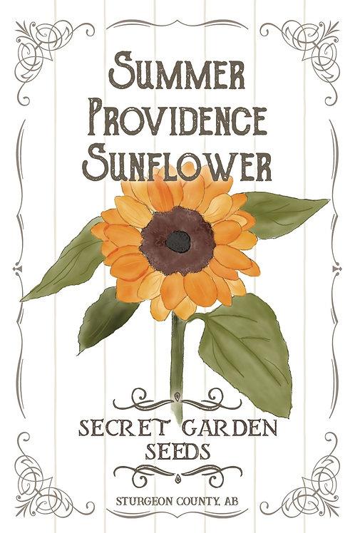 Summer Providence Sunflower