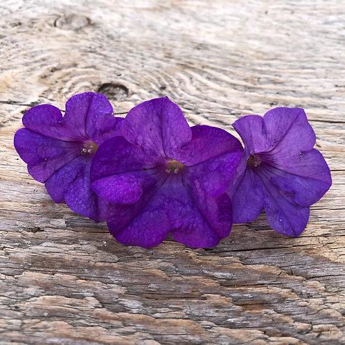 "Petunia Surfina Heavenly Blue- 3.5"" pot"