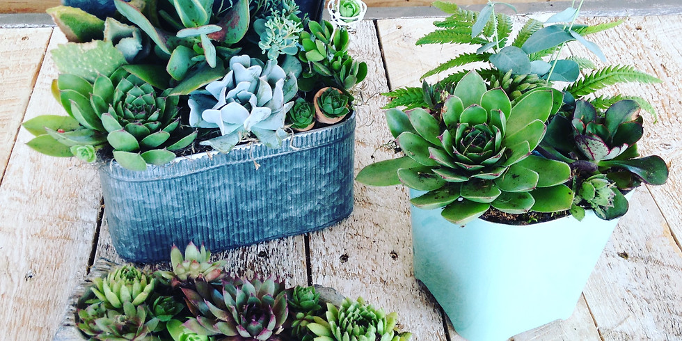 Drop in Sundays! Create a Succulent/Cactus Planter!