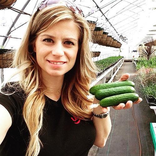 Cucumber Hanging Basket