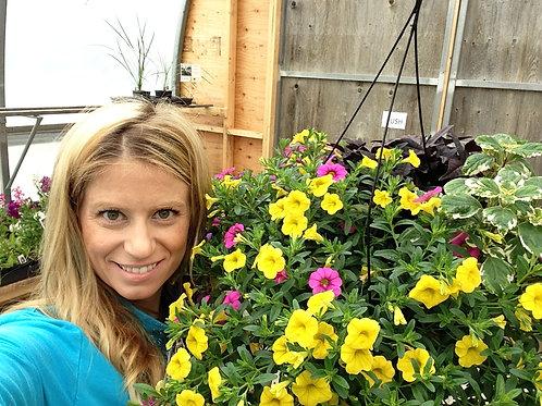 "Calibrachoa Bloomtastic Yellow 3.5"" pot"