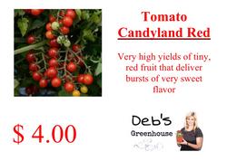 candyland red