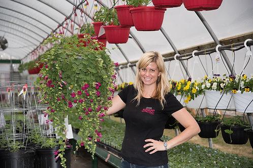 """Lofos Compact Rose {hummingbird vine} 3.5"""" pot"""