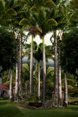Royal Palms - Leeward Islands