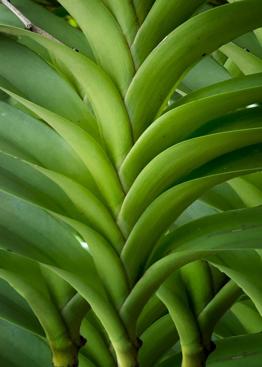 Plantasm