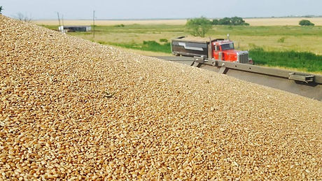 Wheat 2017.jpg