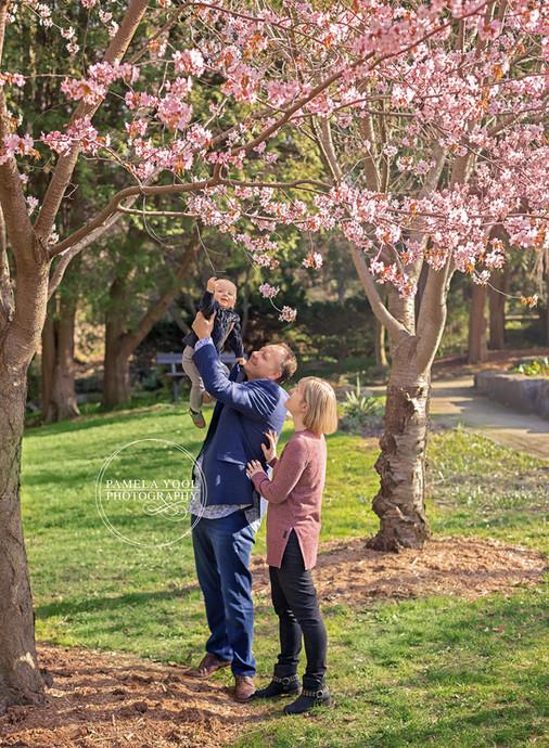 Cherry Blossom Photos Toronto