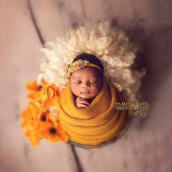 Best Toronto Newborn Photographer