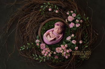 Pamela-Yool-Photography---Roses-copy.jpg