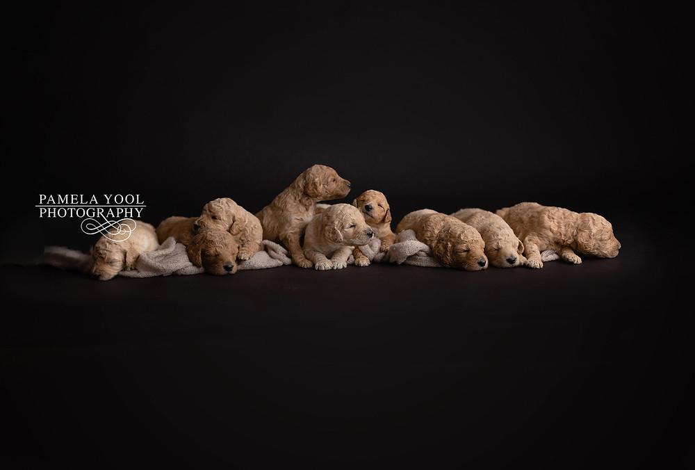 Toronto Pet Photographer