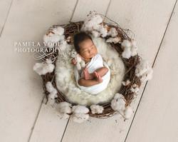 Newborn photographer Etobicoke