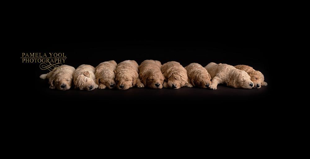 Toronto Dog and Pet Photography