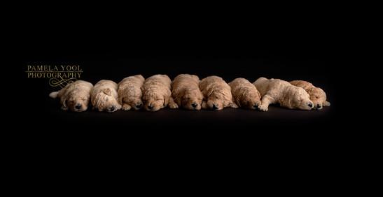 Pet Photography Toronto