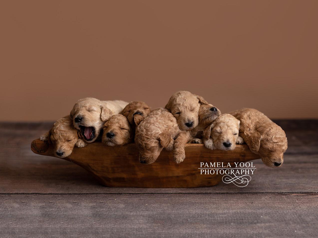 Dog and Pet Photography Toronto