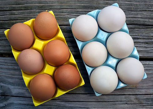 Brown chicken and white duck eggs in trays.