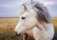 pony-2235916_960_720.webp