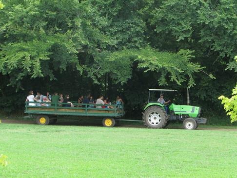 tractorhayridewoods.JPG