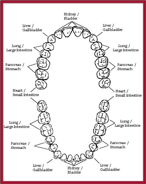 קשתות שיניים