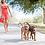 רצועה כפולה לכלבים