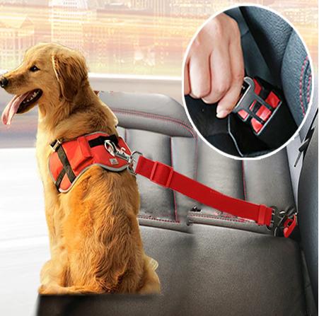 חגורת בטיחות לכלבים