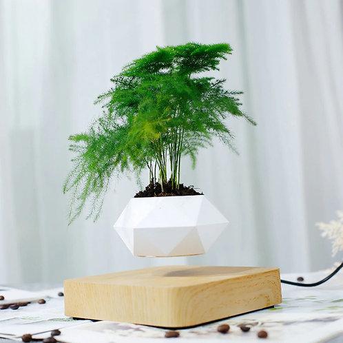 צמח צף - מתנה מושלמת לבית או למשרד