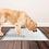 Thumbnail: ספרי אילוף לכלבים וחתולים