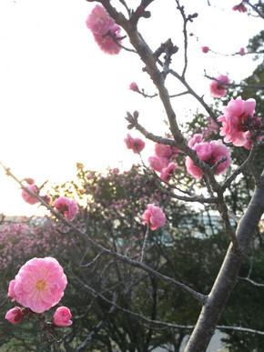 "Spring ""梅"""