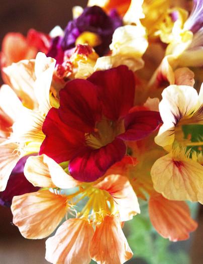 Nastursum bouquet