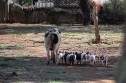Mash & Piglets