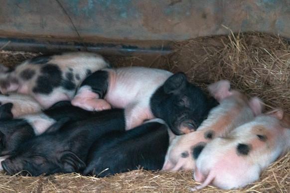 Mash's Babies Asleep
