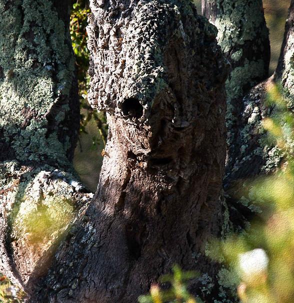Tree Elemental