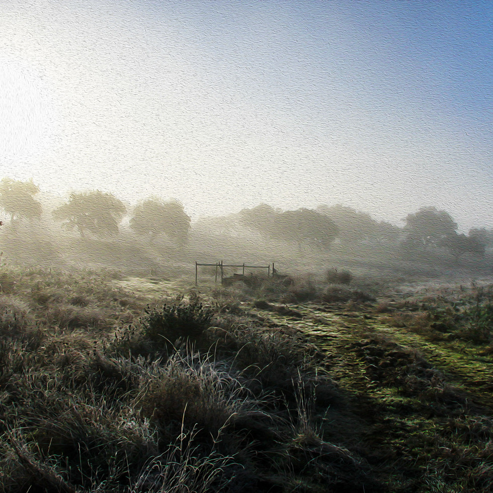 Winter Morning Walk