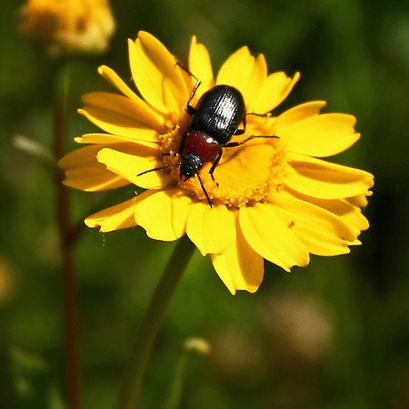 Yellow and Bug