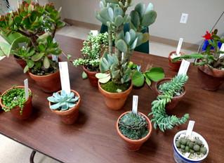 Succulents- October Meeting & Program