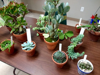 Succulents- October Meeting & Program