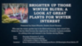 Brighten up Those Winter Blues Flyer (1)