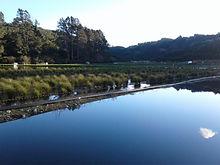 Pond+Wetland.jpg